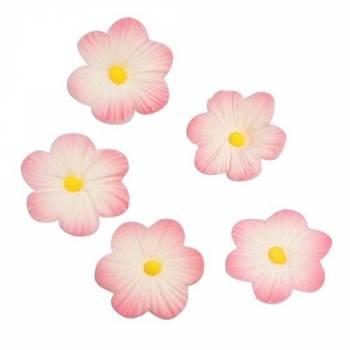 12 Mini gänseblümchen rosa