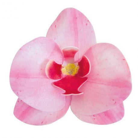 10 Rosa Orchideen aus Azyme essbar, um Ihre Kuchen zu dekorieren Größe einer Blume: 8.5cm x 7.5cm