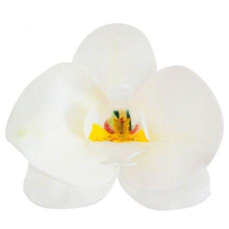 10 Weiße Orchideen aus esserbarer Azyme, um Ihre Kuchen zu dekorieren Größe einer Blume: 8.5cm x 7.5cm