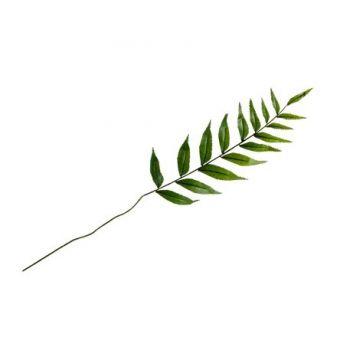 Blatt laurier grün 36cm