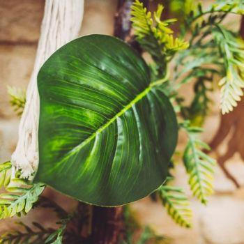 Blatt des grünen Scindapsus