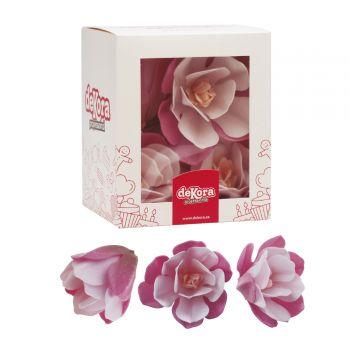 10 Magnolias rosa Azyme